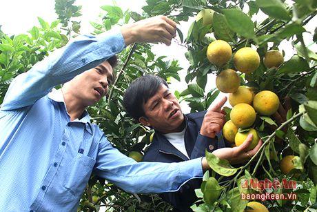 Phuc trang de giu chat luong va thuong hieu cam Vinh - Anh 2