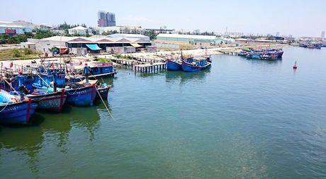 So tuyen nha dau tu Du an PPP luong hang hai Tho Quang – Da Nang - Anh 1