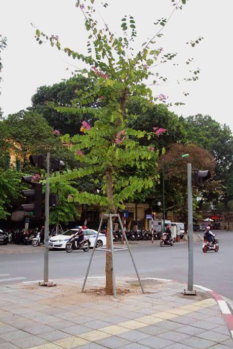 Hoa ban Tay Bac moi trong no giua mua dong Ha Noi - Anh 3