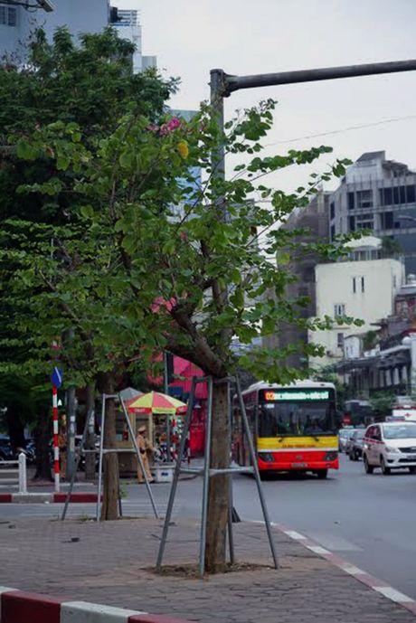 Hoa ban Tay Bac moi trong no giua mua dong Ha Noi - Anh 8