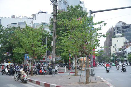 Hoa ban Tay Bac bat ngo no ruc ro giua troi Dong Ha Noi - Anh 8