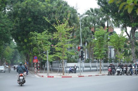 Hoa ban Tay Bac bat ngo no ruc ro giua troi Dong Ha Noi - Anh 9