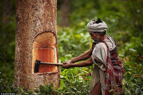 Kham pha cuoc song cua nhung nguoi du muc o Nepal qua anh - Anh 2