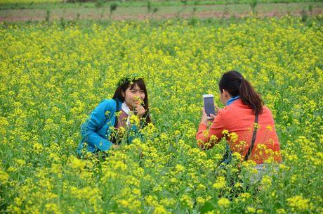 Chum anh: Gioi tre phat cuong voi thien duong hoa cai no ro o Thai Binh - Anh 1