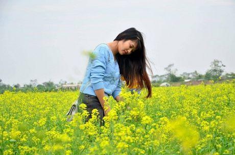 Chum anh: Gioi tre phat cuong voi thien duong hoa cai no ro o Thai Binh - Anh 4
