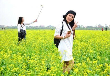 Chum anh: Gioi tre phat cuong voi thien duong hoa cai no ro o Thai Binh - Anh 6
