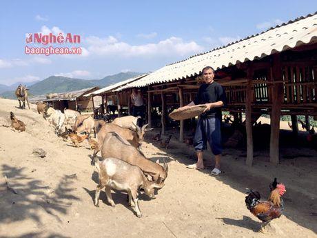 Hang nghin nong dan vung bien Que Phong, Tuong Duong san xuat gioi - Anh 1