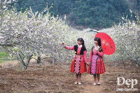Hay len Chau Moc mua Man no hoa - Anh 24