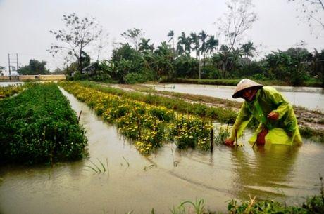 Thua Thien – Hue: Hau mua lu, nguoi trong hoa Tet khoc rong - Anh 5