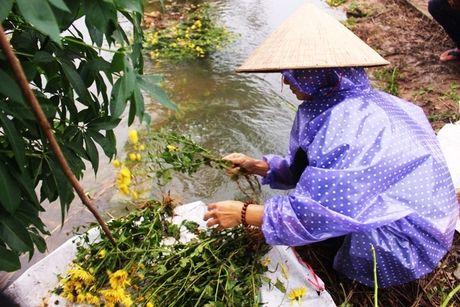 Thua Thien – Hue: Hau mua lu, nguoi trong hoa Tet khoc rong - Anh 7
