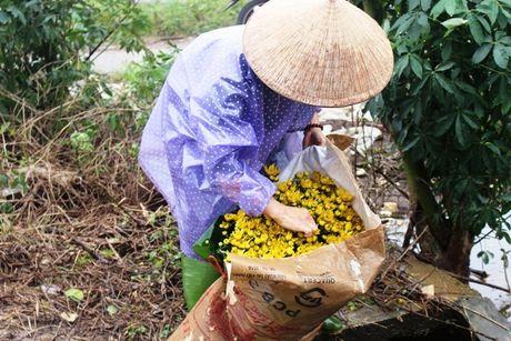 Thua Thien – Hue: Hau mua lu, nguoi trong hoa Tet khoc rong - Anh 8