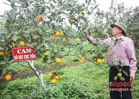 Cam 'tien vua' 50.000 dong/qua hut khach dip Tet - Anh 1