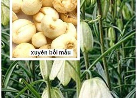 6 mon an bai thuoc tot tu luon chua benh lao phoi - Anh 4