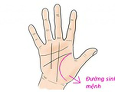 Tu xem so phan qua ban tay: La lung duong con cai - Anh 8