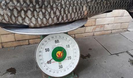Clip: Can canh ca tram den nang 41 kg cau duoc o long ho song Da - Anh 2