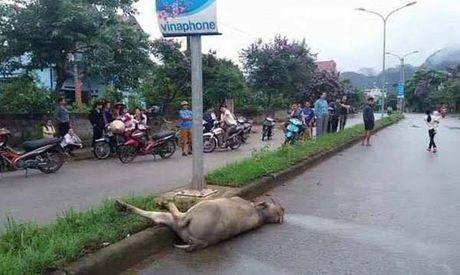 Hoa Binh: Dau long trau mong sang duong bi dien ho giat chet - Anh 1