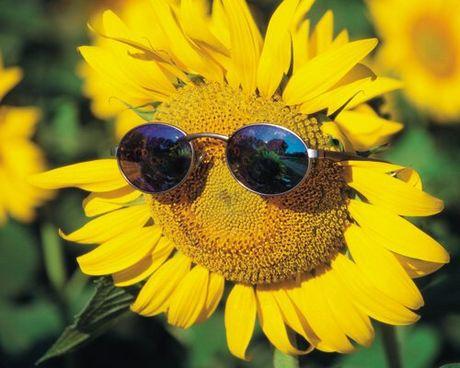 Y nghia hoa huong duong trong cuoc song ban nen biet - Anh 1