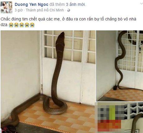 Nha cua Duong Yen Ngoc bi ran ho mang khong lo bo vao? - Anh 2