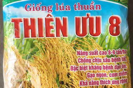 Lua xuan nhiem dao on co bong (bai 1): Lan theo mang luoi cung ung giong - Anh 1