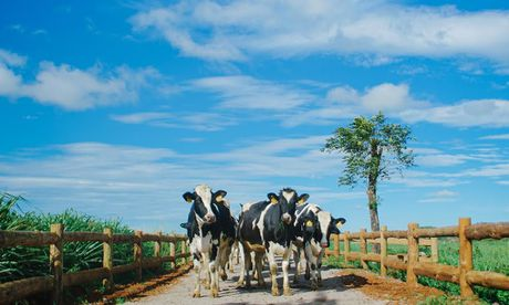 Vinamilk Organic Farm tour - Nhung kham pha thu vi - Anh 3