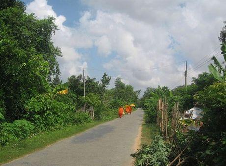 Hoa Tan dang doi thay - Anh 1