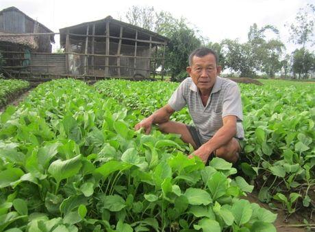 Hoa Tan dang doi thay - Anh 2