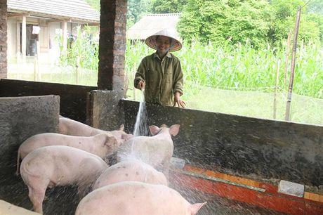 Lon tai Lao Cai 'nhay' 5 – 6 gia/ngay, kho du doan toi day - Anh 1