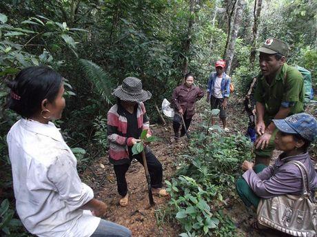 Quang Binh: Giam doc rung phong ho 'mat tich' bi an - Anh 1