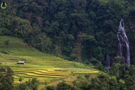 Lac loi trong thung lung lua chin trang le nhat Lao Cai - Anh 9