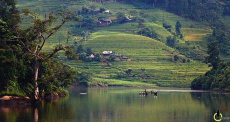 Lac loi trong thung lung lua chin trang le nhat Lao Cai - Anh 10