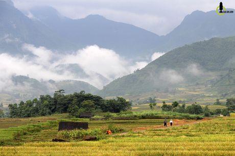 Lac loi trong thung lung lua chin trang le nhat Lao Cai - Anh 11
