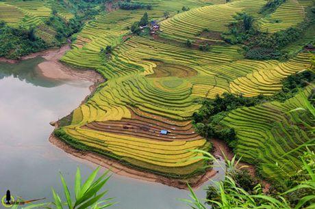 Lac loi trong thung lung lua chin trang le nhat Lao Cai - Anh 2