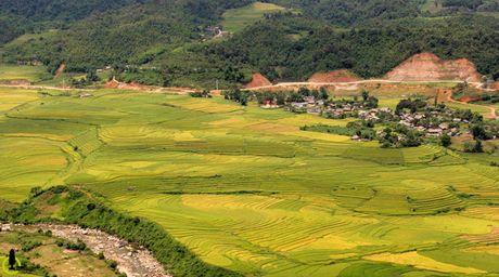 Lac loi trong thung lung lua chin trang le nhat Lao Cai - Anh 6