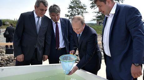 Tong thong Putin lam cong dong mang soi suc khi minh tran cau ca o Siberia - Anh 10
