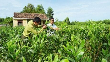 Quang Binh mo rong dien tich, nang cao hieu qua kinh te rung - Anh 1