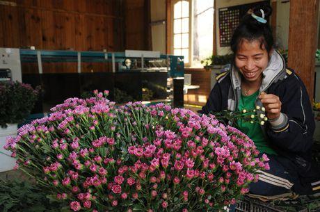 Chuyen ly thu ve chang trai nguoi Nhat trong hoa o Da Lat - Anh 3