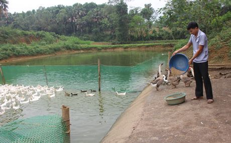 8x 'mat tay' nuoi ca giong - Anh 2