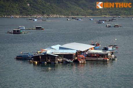 Dam say truoc khung canh ky vi cua vinh Vung Ro - Anh 11