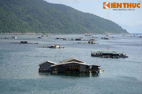Dam say truoc khung canh ky vi cua vinh Vung Ro - Anh 14