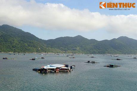 Dam say truoc khung canh ky vi cua vinh Vung Ro - Anh 2