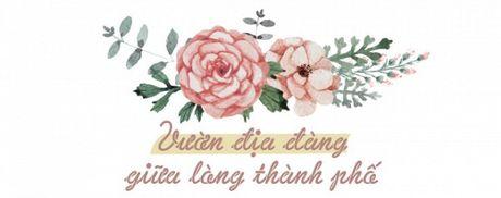 Thuong tra o vuon dia dang giua long Sai Gon - Anh 1