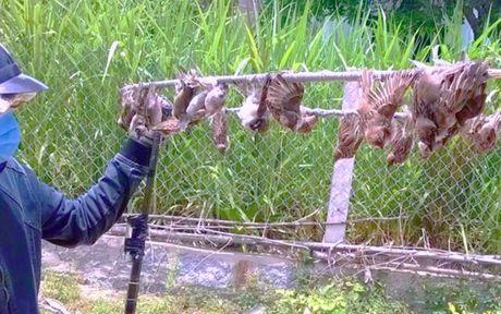 'Nghe thuat' san bat chim troi vi su khoai khau thoi thuong - Anh 1