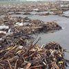 Ngh An: Bin Din Thành tràn ngp rác