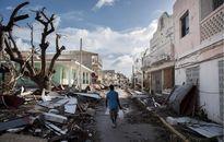 Caribbe sau siêu bão Irma: Thực phẩm cạn kiệt, hôi của tràn lan