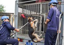 Diễn đàn: Dùng thòng lọng để bắt chó thả rông có tàn nhẫn quá hay không?