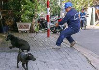Chi cục Thú y TP HCM: 'Chỉ tiêu huỷ chó thả rông bị bệnh dại'