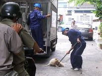 'Chó bệnh nặng, tôi thả ra đường để các anh đến bắt'