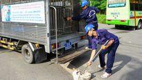 TP HCM: Mua lại chó thả rông để làm thức ăn cho sư tử là thông tin bịa đặt