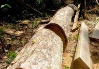 Bắt ba cán bộ và nguyên cán bộ Ban Quản lý rừng phòng hộ Sông Tranh