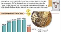 Nhập khẩu thức ăn tăng gánh nặng cho ngành chăn nuôi